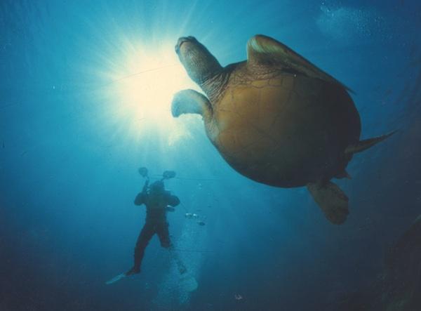 Diving in Sabah
