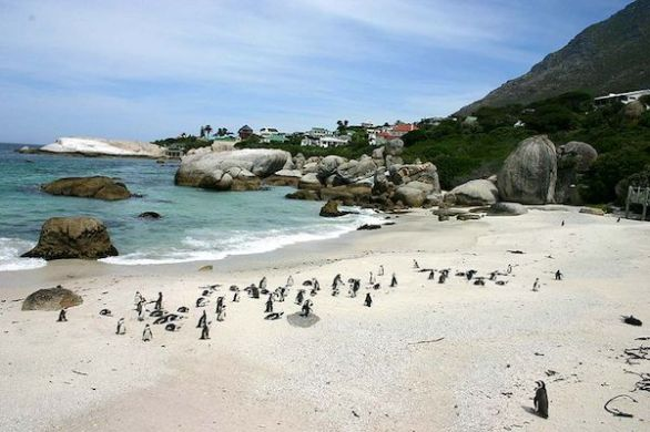 Boulders Bay Penguins