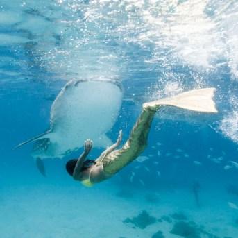 Mermaid Swimming with a Waleshark in Cebu