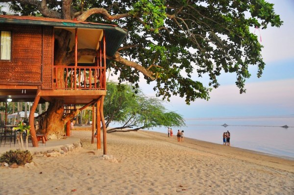 Tree House at Laiya Coco Grove Resort