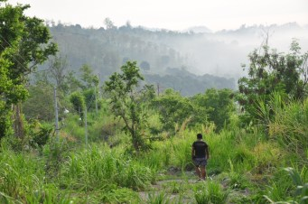 The Dawn Jungle Trek is offered at the resort on a regular basis