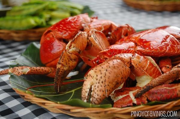 Coconut Crabs in Sabtang Island
