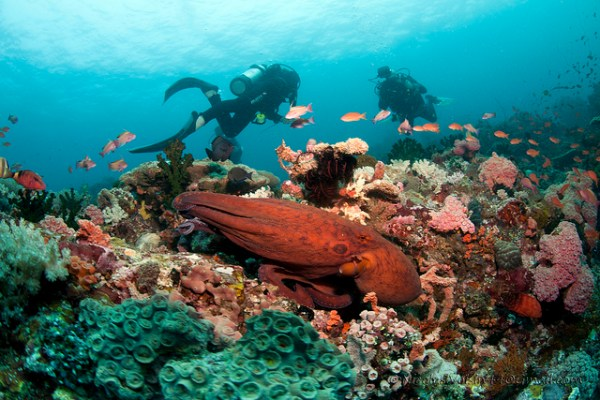 Scuba Diving in the Philippines by nicolas-voisin
