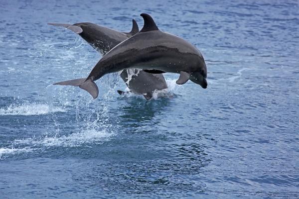 Dolphin Watching in Puerto Princesa Palawan