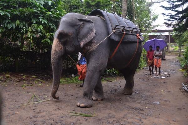 Tusker Trail in Kerala