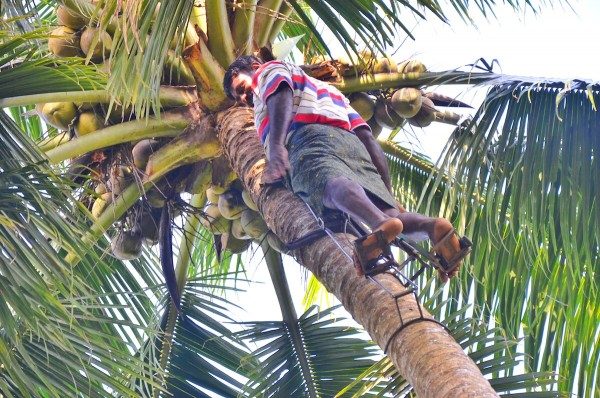 Climbing Coconut using an improvised stepper