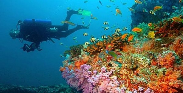 Dive Puerto Galera by Travel-Stone.com