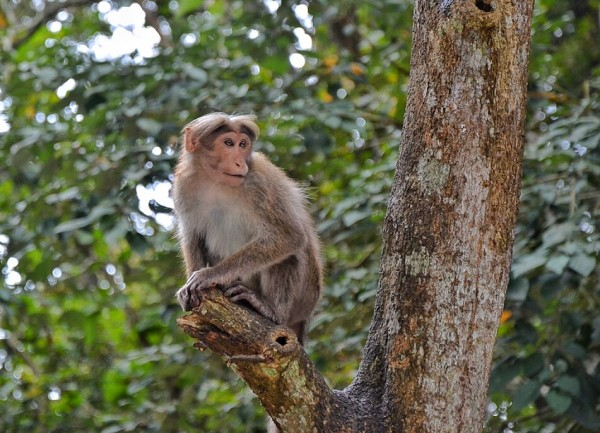 Friendly Monkey near Periyar Lake Entrance