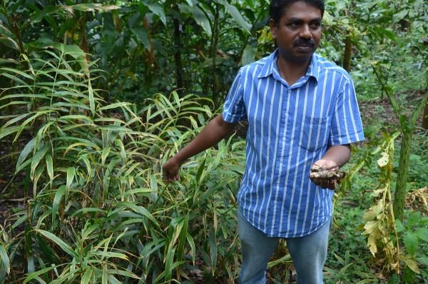 Spice Plantation in Thekkady