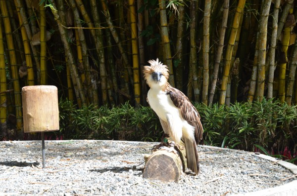 Davao Philippine Eagle Center