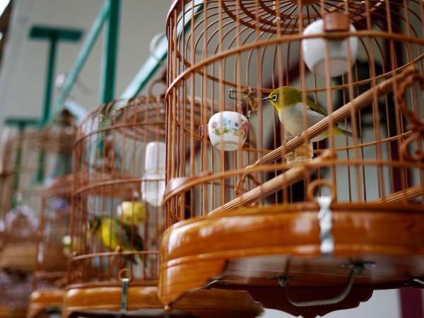 Bird Market in Mong Kok by Derrick S via Flickr