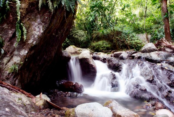 Indulge in the sights and sounds of nature by enjoying a quick dip in the cold spring waters of T'daankini Falls.