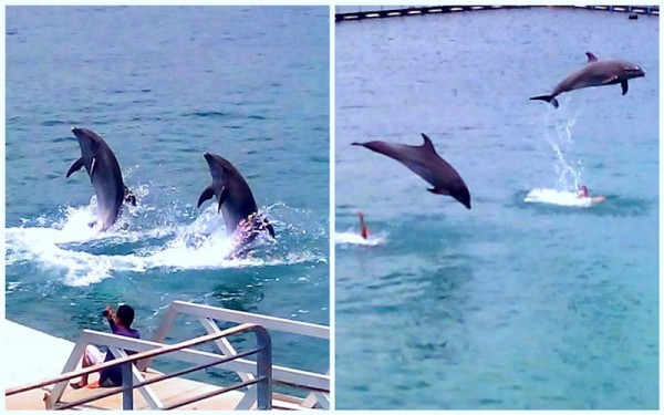 Dolphins doing tricks and stunts