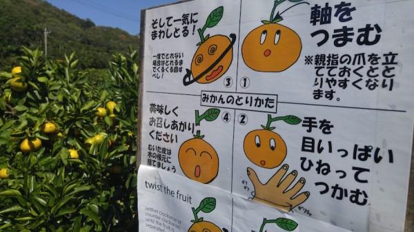 How to Pick Oranges