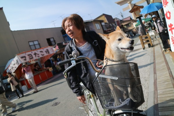 Local dog and his owner enjoying the festival