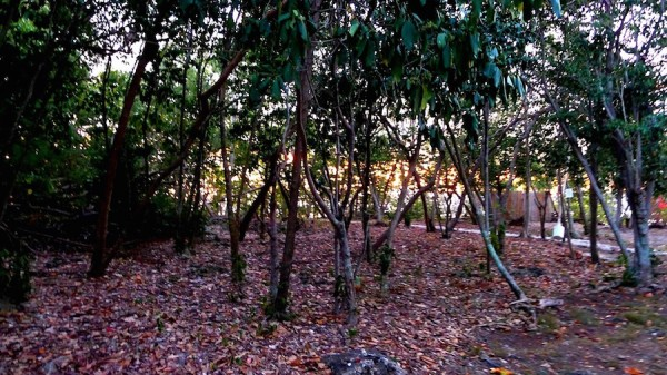 Lush forests and undergrowths