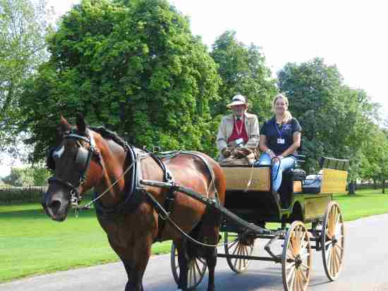luxury horse drawn carriage