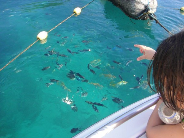 Bread crumbs, satisfied fishes and happy children off the coast of Santelmo