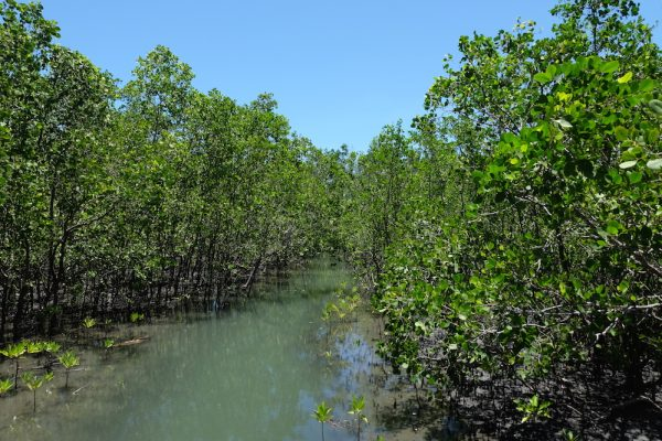 Silonay Mangrove Conservation Area