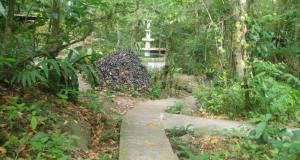 Tropical trees and shrubs flourishing in the zoological garden
