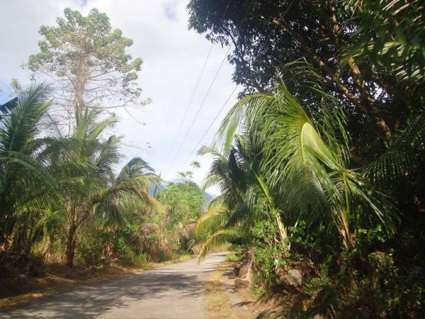Tropical trees lining the road in Mambajao