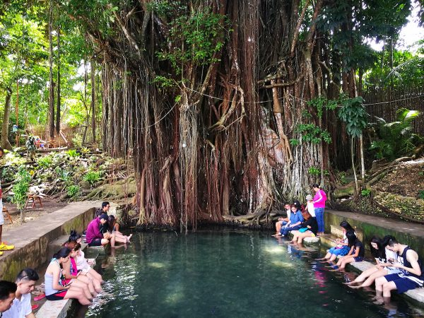 Old Enchanted Balete Tree in Siquijor