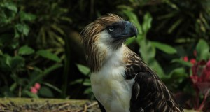 Philippine Eagle Park - Davao Travel Guide