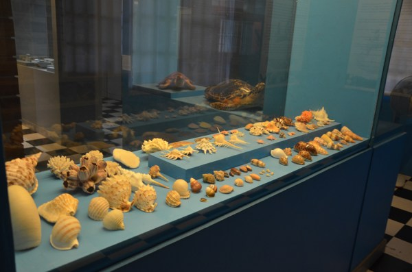Shell Collection inside Palawan Museum
