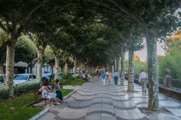 A canopy of trees covers the sidewalk in Burgos.