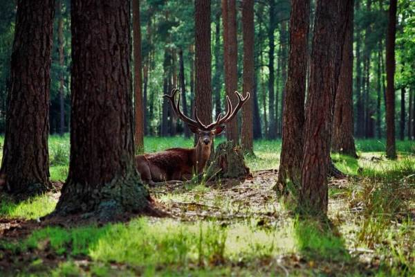 Bialowieza Forest National Park- Must-See National Parks in Belarus