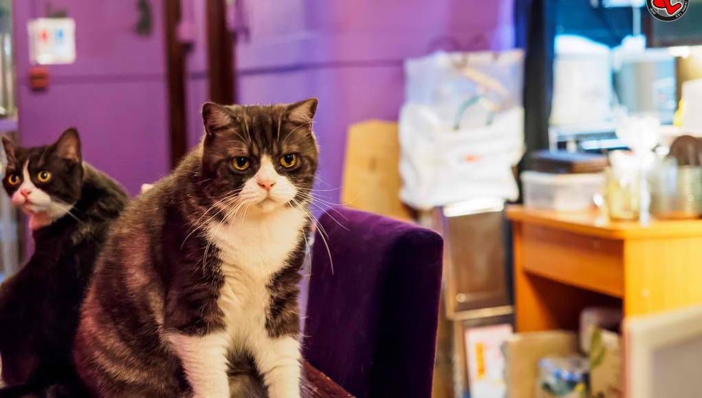 Cat Cafes in Metro Manila