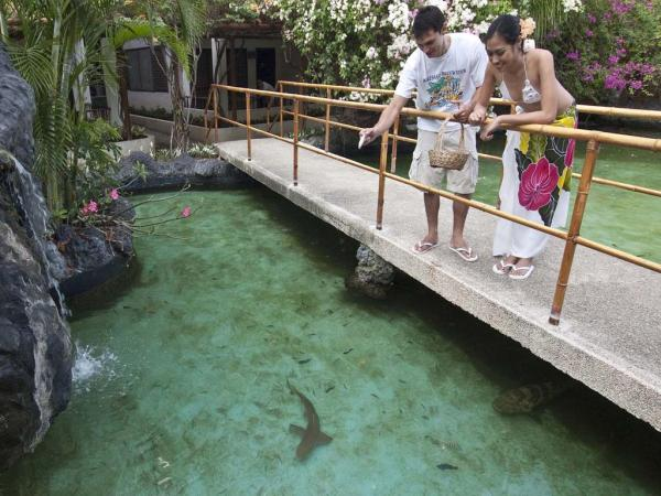 Maribago Resort Shark Feeding