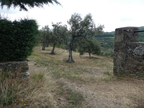 ancient stone walls protect an olive grove
