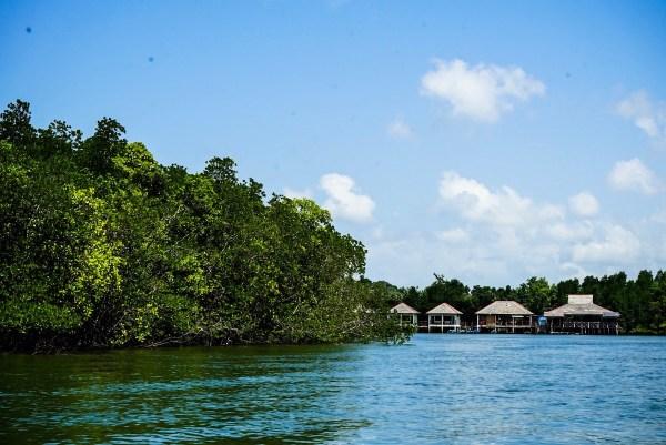 Bintan Mangrove Tour