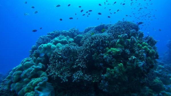 Coral Reef in Dauin -'Treasure' hunting in Negros Oriental