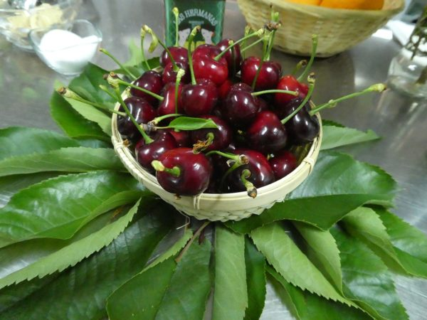 Life is a bowl of cherries in the Jerte Valley of Extremadura