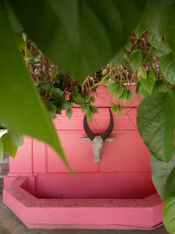 A MIX OF FEMININITY AND MASCULINITY. Coral Pink has always been the house's color since it was erected. A mixture of powdered red corals with calcium carbide (kalburo) and dissolved with water made this color possible. The mansion showed how Don Arsenio and Dona Rosario complement each other's personalities –a bull's head that symbolizes a strong foundation and the color of love that has wrapped the whole mansion's exterior. Oppo F3 caught the rustic details I want to see and delivered the depth that I want to imply.