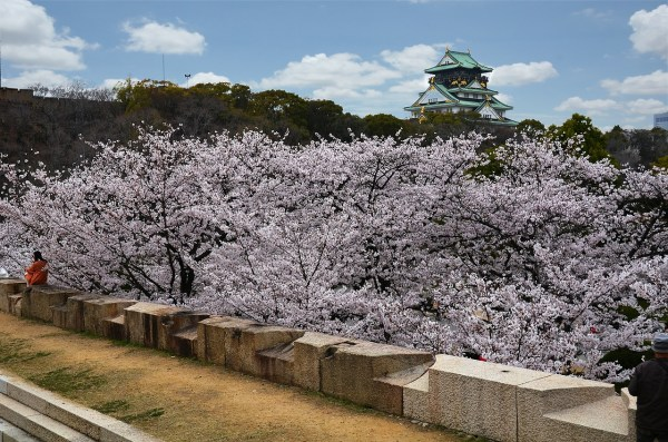 Cherry Blossoms in Osaka Castle