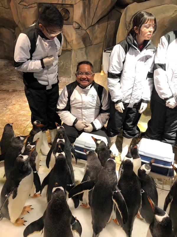 Close encounter with OPHK Penguins