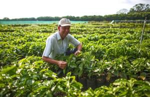 Starbucks Hacienda Map - Source of Hacienda Alsacia Coffee in Costa Rica