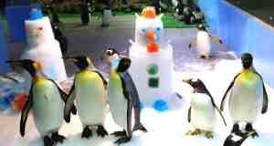 Penguin Dress-up Delights