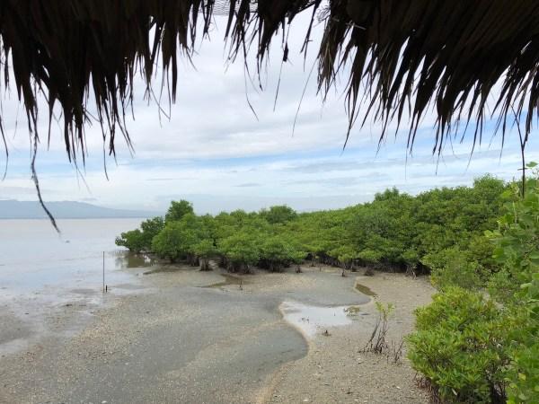 Sasmuan Bangkung Mangrove Area