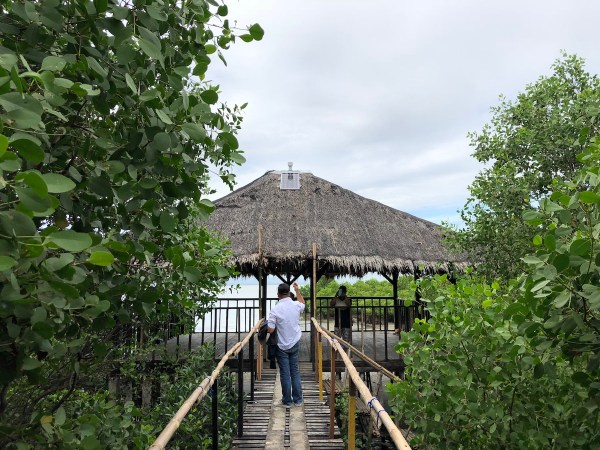 Sasmuan Mangrove Area