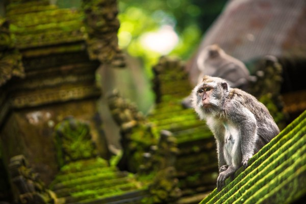 Monkey Forest - Ubud Bali photo via Sheraton Kuta Bali Resort