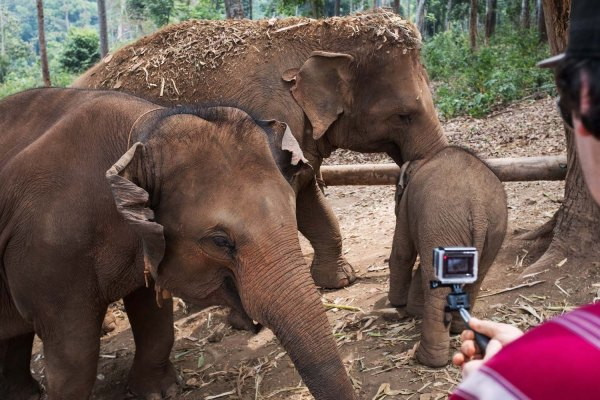 A day at the Elephant Sanctuary