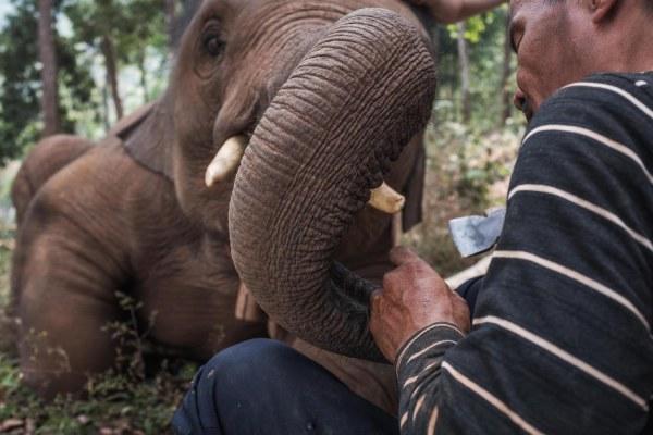 Elephant Jungle Paradise Park in Chiang Mai