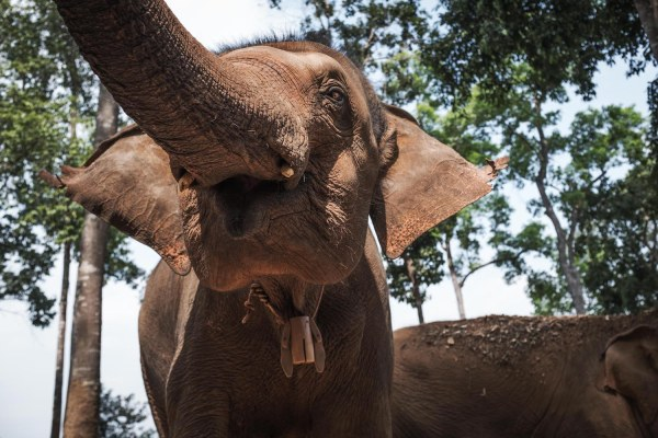 Elephant Jungle Sanctuary 2 - Chiang Mai LQ