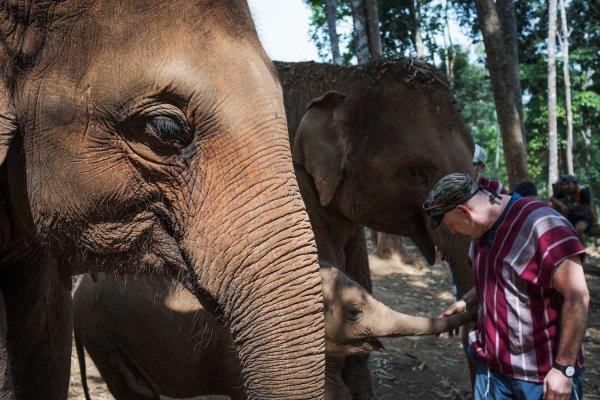 Elephant Jungle Sanctuary 3 - Chiang Mai LQ