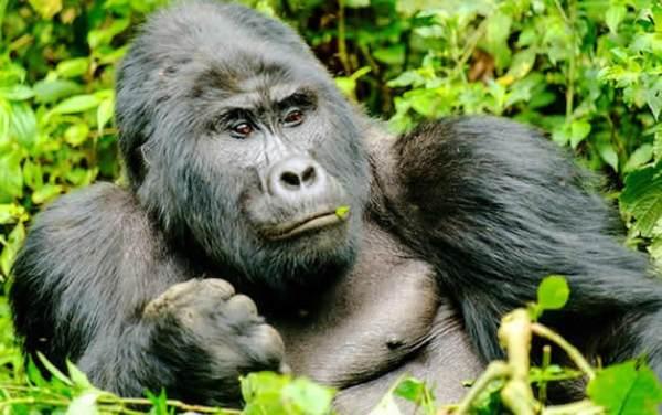 Mountain Gorilla Trekking Experience Tips