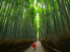 Arashiyama photo by Walter Mario Stein via Unsplash